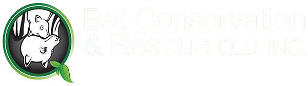 Bat Conservation and Rescue QLD Inc - Non-profit organisation dedicated to preserving the population of flying foxes and microbats in Queensland through rescue, rehabilitation and education.